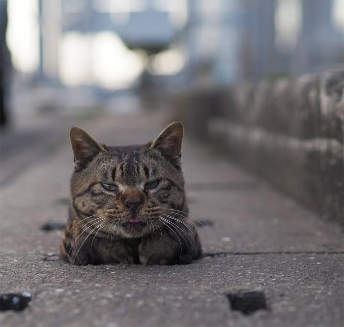Bị chủ bạc đãi, anh em mèo hoang Nhật kéo nhau xuống cống sống đời an yên - Ảnh 2.