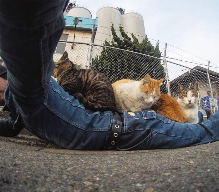 Bị chủ bạc đãi, anh em mèo hoang Nhật kéo nhau xuống cống sống đời an yên - Ảnh 3.
