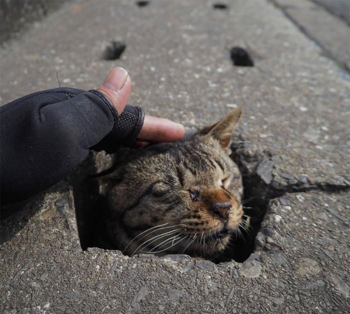 Bị chủ bạc đãi, anh em mèo hoang Nhật kéo nhau xuống cống sống đời an yên - Ảnh 4.
