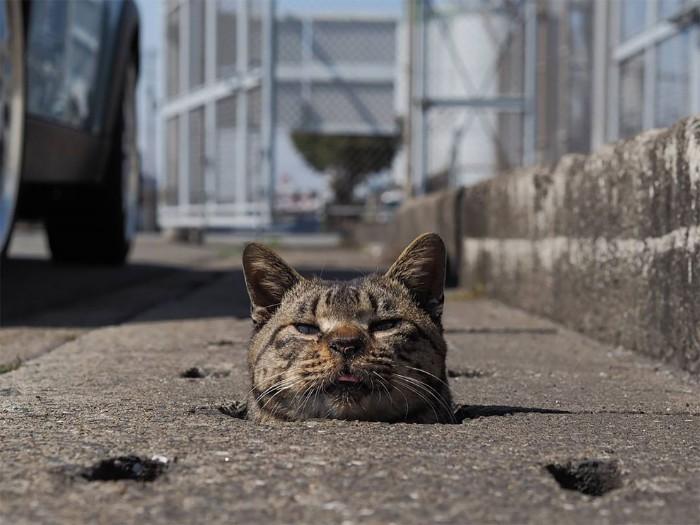 Bị chủ bạc đãi, anh em mèo hoang Nhật kéo nhau xuống cống sống đời an yên - Ảnh 6.