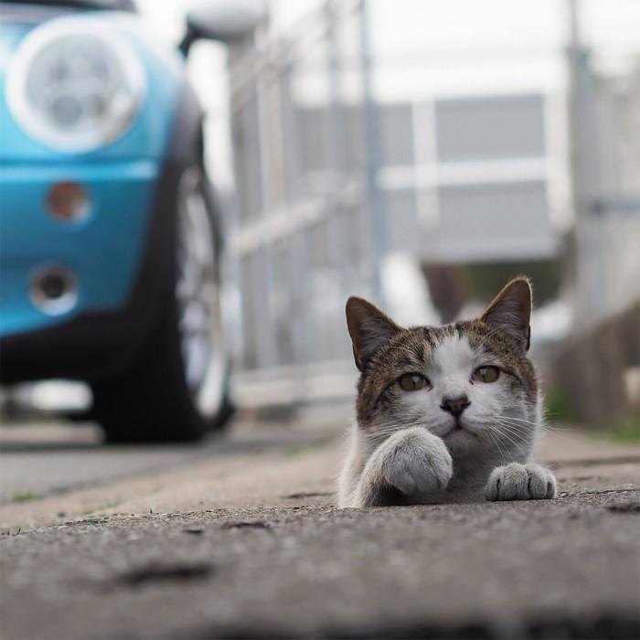 Bị chủ bạc đãi, anh em mèo hoang Nhật kéo nhau xuống cống sống đời an yên - Ảnh 7.
