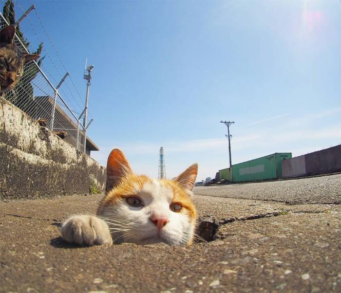 Bị chủ bạc đãi, anh em mèo hoang Nhật kéo nhau xuống cống sống đời an yên - Ảnh 9.