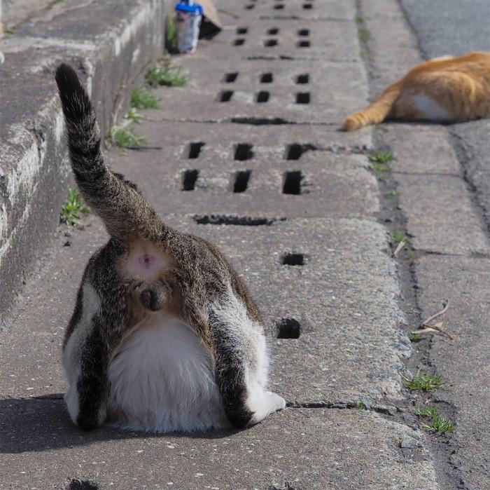 Bị chủ bạc đãi, anh em mèo hoang Nhật kéo nhau xuống cống sống đời an yên - Ảnh 11.