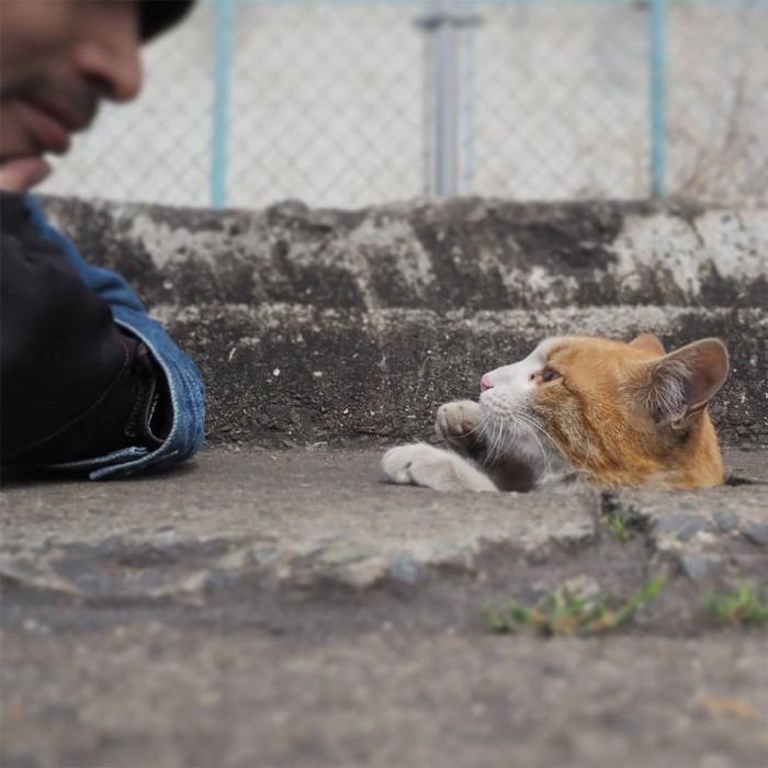 Bị chủ bạc đãi, anh em mèo hoang Nhật kéo nhau xuống cống sống đời an yên - Ảnh 13.