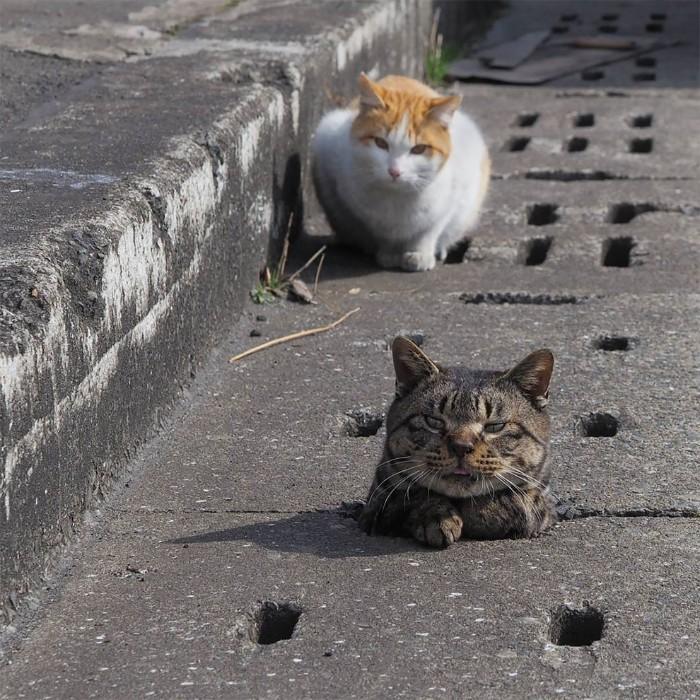 Bị chủ bạc đãi, anh em mèo hoang Nhật kéo nhau xuống cống sống đời an yên - Ảnh 14.