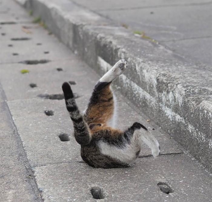 Bị chủ bạc đãi, anh em mèo hoang Nhật kéo nhau xuống cống sống đời an yên - Ảnh 15.