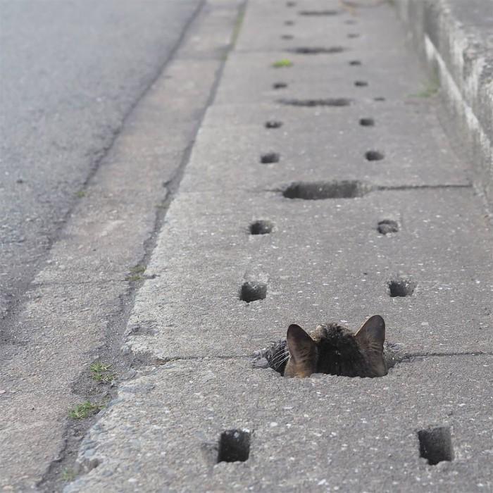 Bị chủ bạc đãi, anh em mèo hoang Nhật kéo nhau xuống cống sống đời an yên - Ảnh 16.