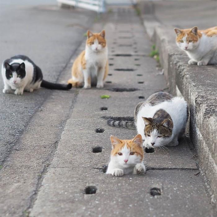 Bị chủ bạc đãi, anh em mèo hoang Nhật kéo nhau xuống cống sống đời an yên - Ảnh 17.