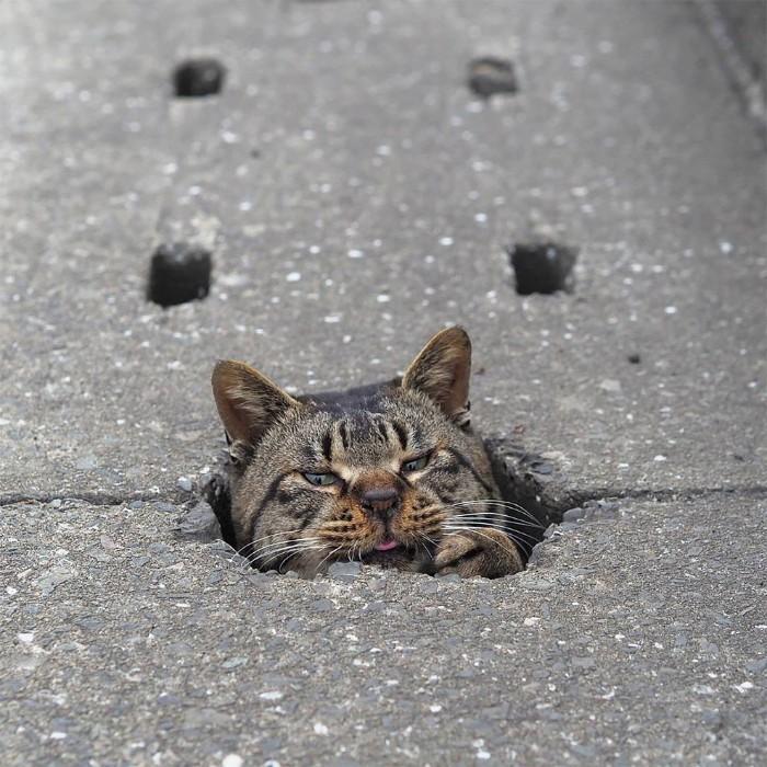 Bị chủ bạc đãi, anh em mèo hoang Nhật kéo nhau xuống cống sống đời an yên - Ảnh 18.