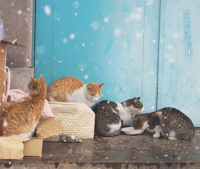 Bị chủ bạc đãi, anh em mèo hoang Nhật kéo nhau xuống cống sống đời an yên - Ảnh 19.
