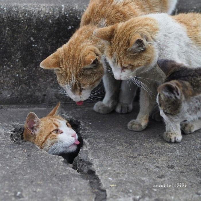 Bị chủ bạc đãi, anh em mèo hoang Nhật kéo nhau xuống cống sống đời an yên - Ảnh 20.