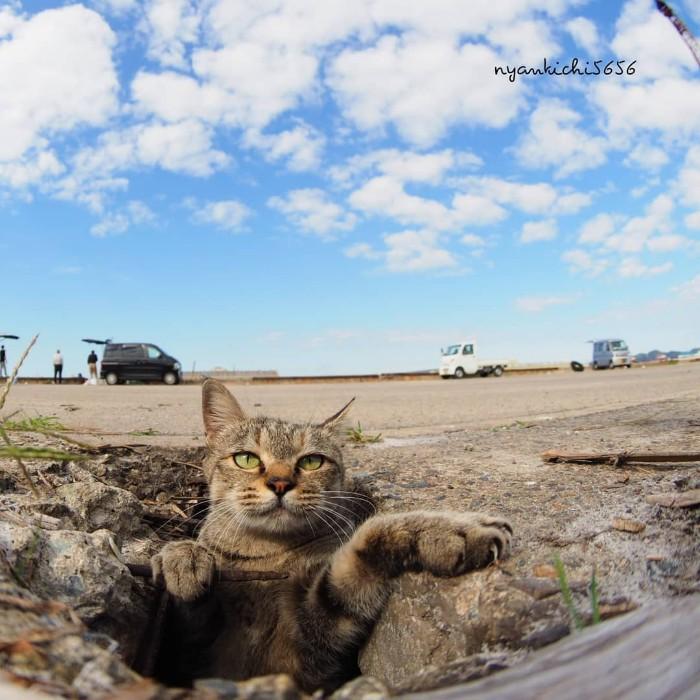 Bị chủ bạc đãi, anh em mèo hoang Nhật kéo nhau xuống cống sống đời an yên - Ảnh 21.