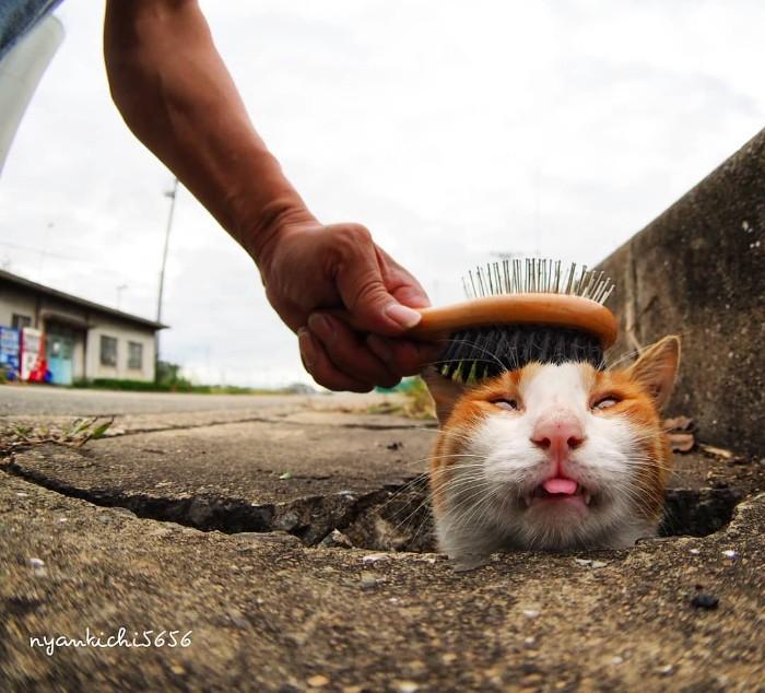 Bị chủ bạc đãi, anh em mèo hoang Nhật kéo nhau xuống cống sống đời an yên - Ảnh 22.