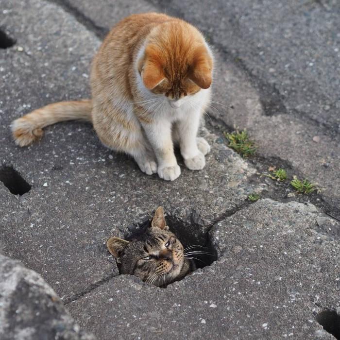 Bị chủ bạc đãi, anh em mèo hoang Nhật kéo nhau xuống cống sống đời an yên - Ảnh 23.