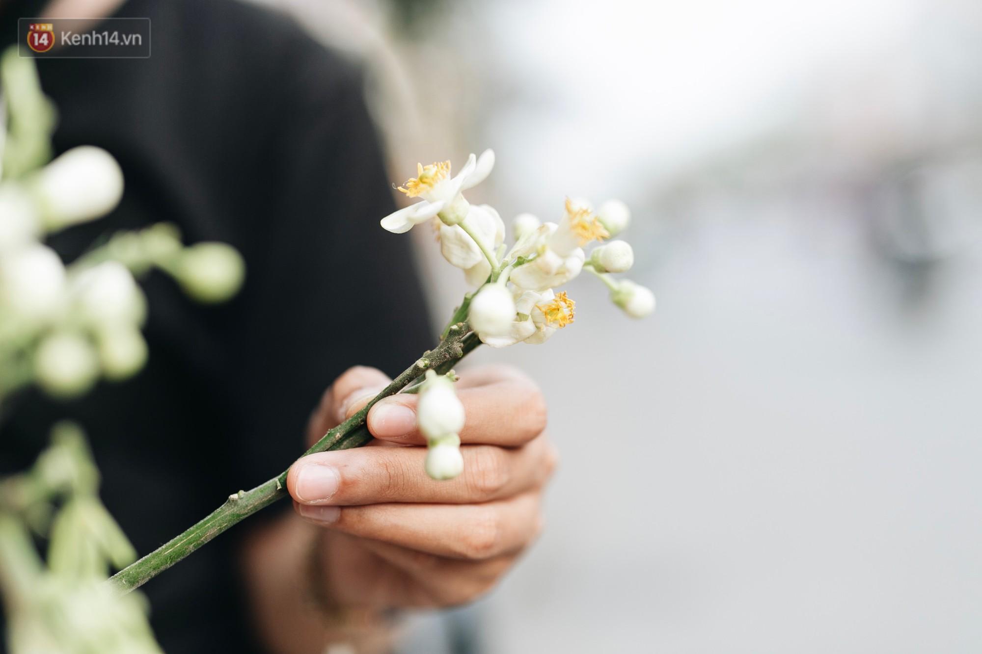 Hoa bưởi tháng 2 theo gió xuống phố Hà Nội, giá lên đến 300.000 đồng/kg vẫn cháy hàng - Ảnh 8.