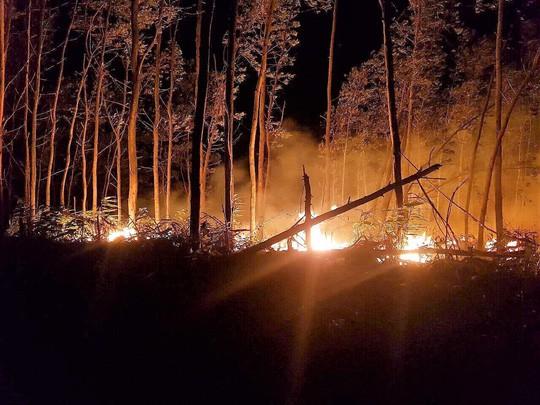 Bất cẩn khi đốt rẫy làm thiêu rụi 5 ha rừng - Ảnh 1.