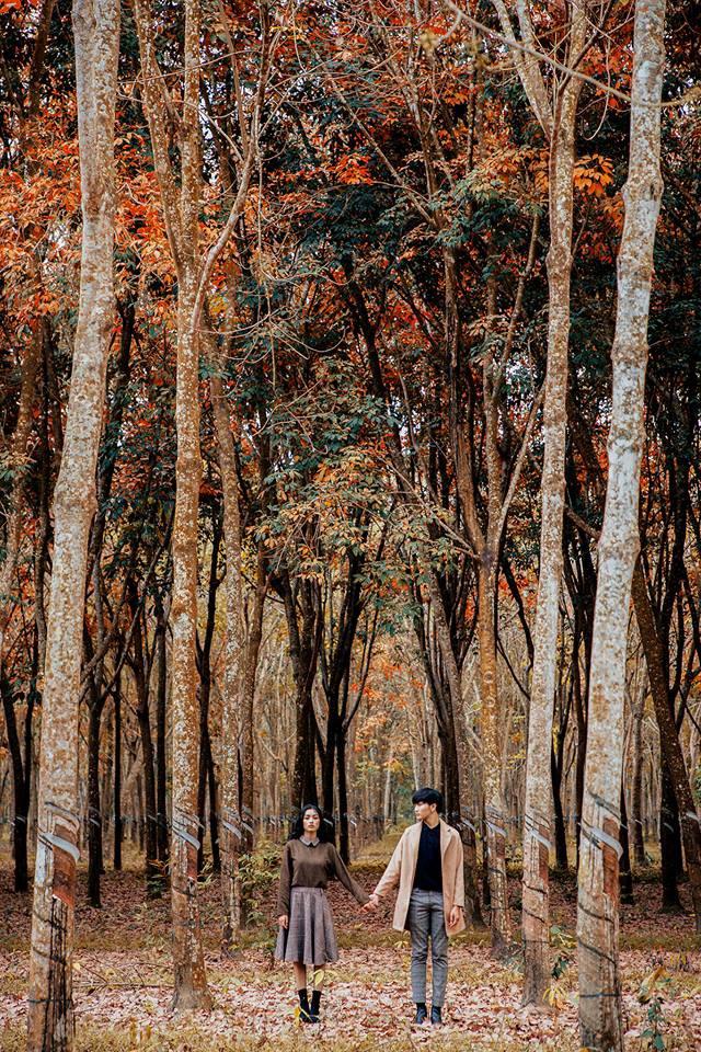 Cực hot: Hướng dẫn đường đi đến rừng cao su lá vàng đẹp như Hàn Quốc cách Sài Gòn chỉ 60km - Ảnh 2.