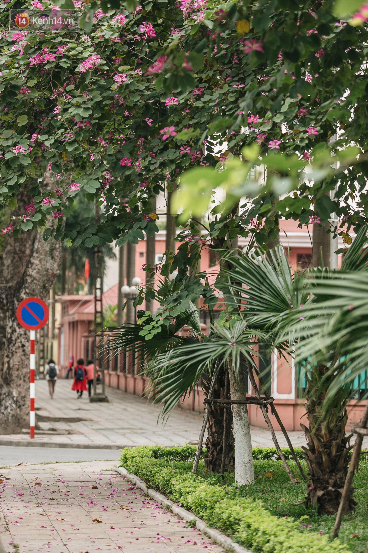 Không cần lên Tây Bắc, hoa ban vẫn bừng nở giữa đất trời Hà Nội cho người dân thỏa sức check-in - Ảnh 12.