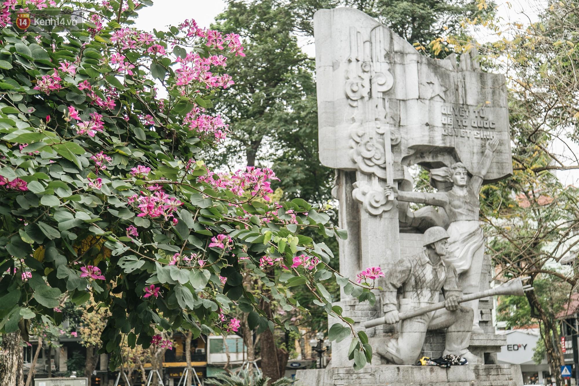 Không cần lên Tây Bắc, hoa ban vẫn bừng nở giữa đất trời Hà Nội cho người dân thỏa sức check-in - Ảnh 9.