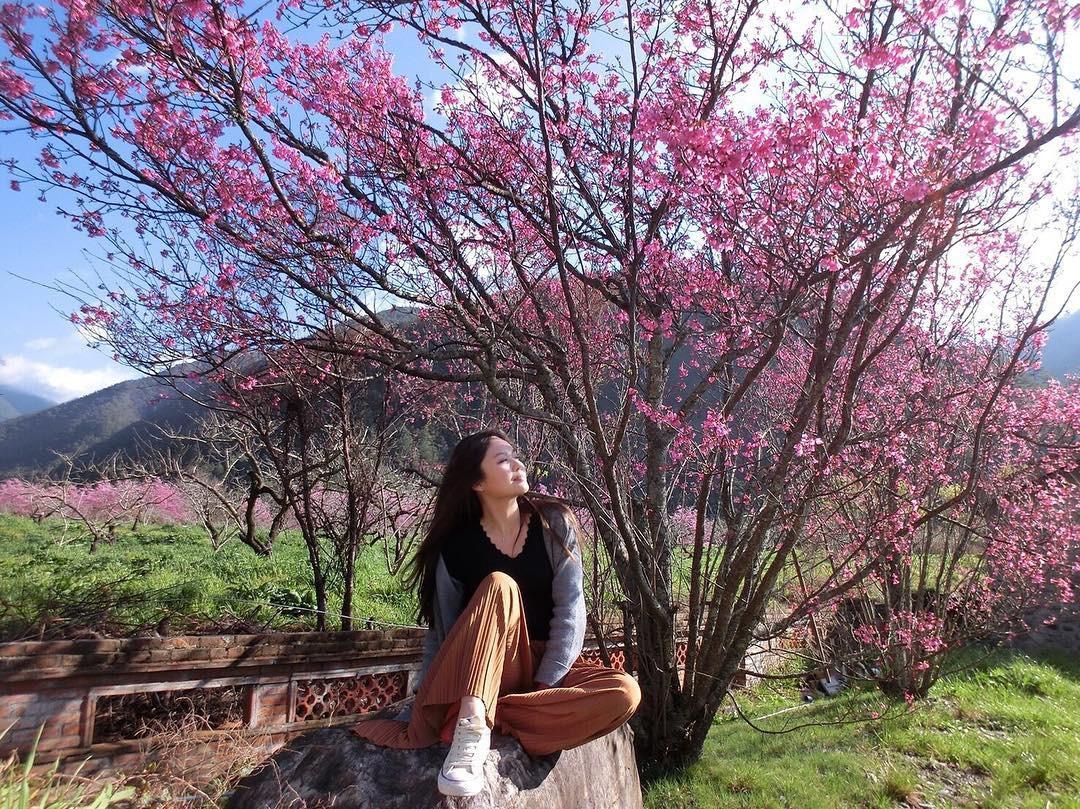 Đài Loan: Hoa anh đào lại nở rợp trời, tạo điều kiện cho trai gái dập dìu chơi xuân - Ảnh 19.