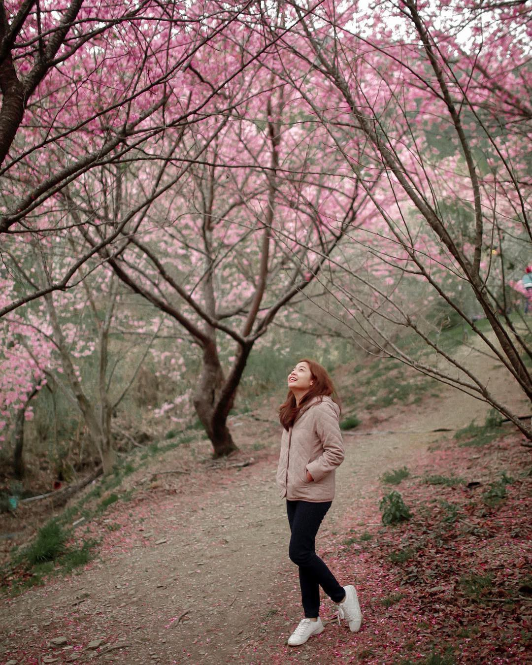 Đài Loan: Hoa anh đào lại nở rợp trời, tạo điều kiện cho trai gái dập dìu chơi xuân - Ảnh 5.