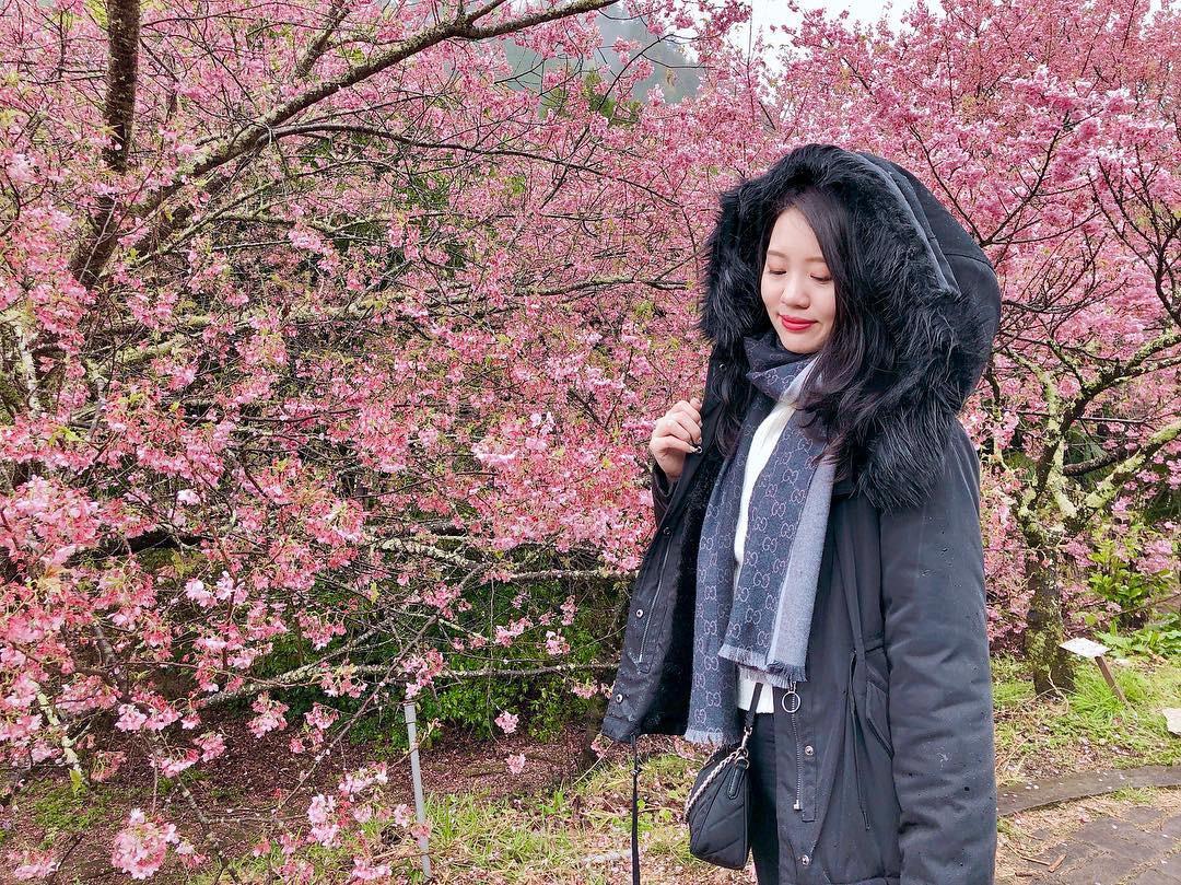 Đài Loan: Hoa anh đào lại nở rợp trời, tạo điều kiện cho trai gái dập dìu chơi xuân - Ảnh 15.