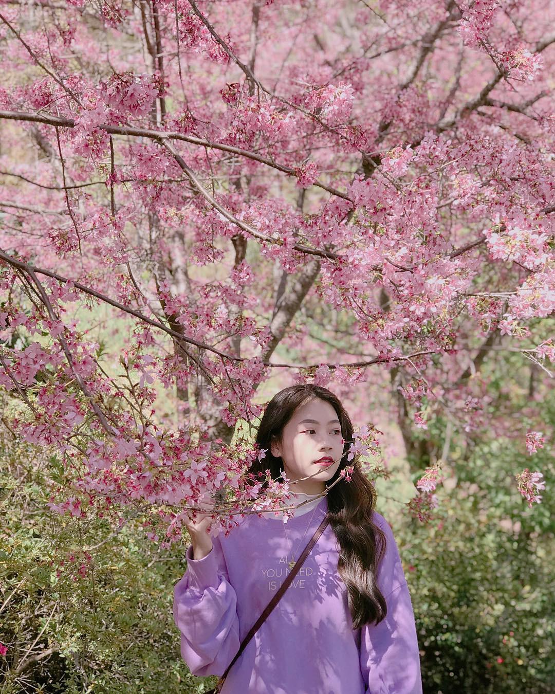 Đài Loan: Hoa anh đào lại nở rợp trời, tạo điều kiện cho trai gái dập dìu chơi xuân - Ảnh 16.