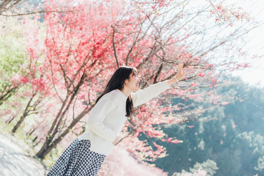 Đài Loan: Hoa anh đào lại nở rợp trời, tạo điều kiện cho trai gái dập dìu chơi xuân - Ảnh 4.