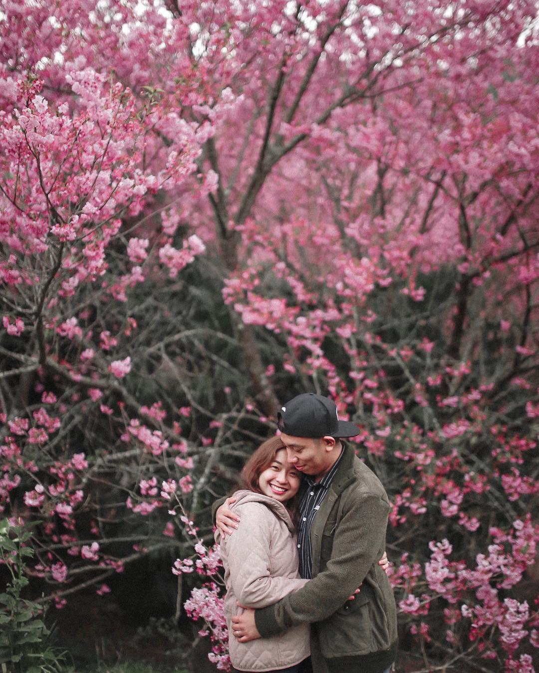 Đài Loan: Hoa anh đào lại nở rợp trời, tạo điều kiện cho trai gái dập dìu chơi xuân - Ảnh 10.