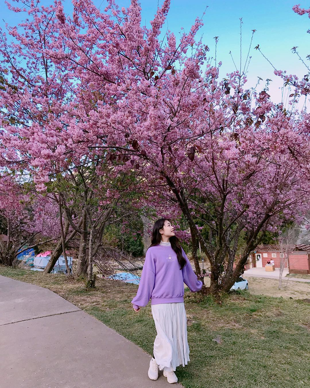 Đài Loan: Hoa anh đào lại nở rợp trời, tạo điều kiện cho trai gái dập dìu chơi xuân - Ảnh 12.