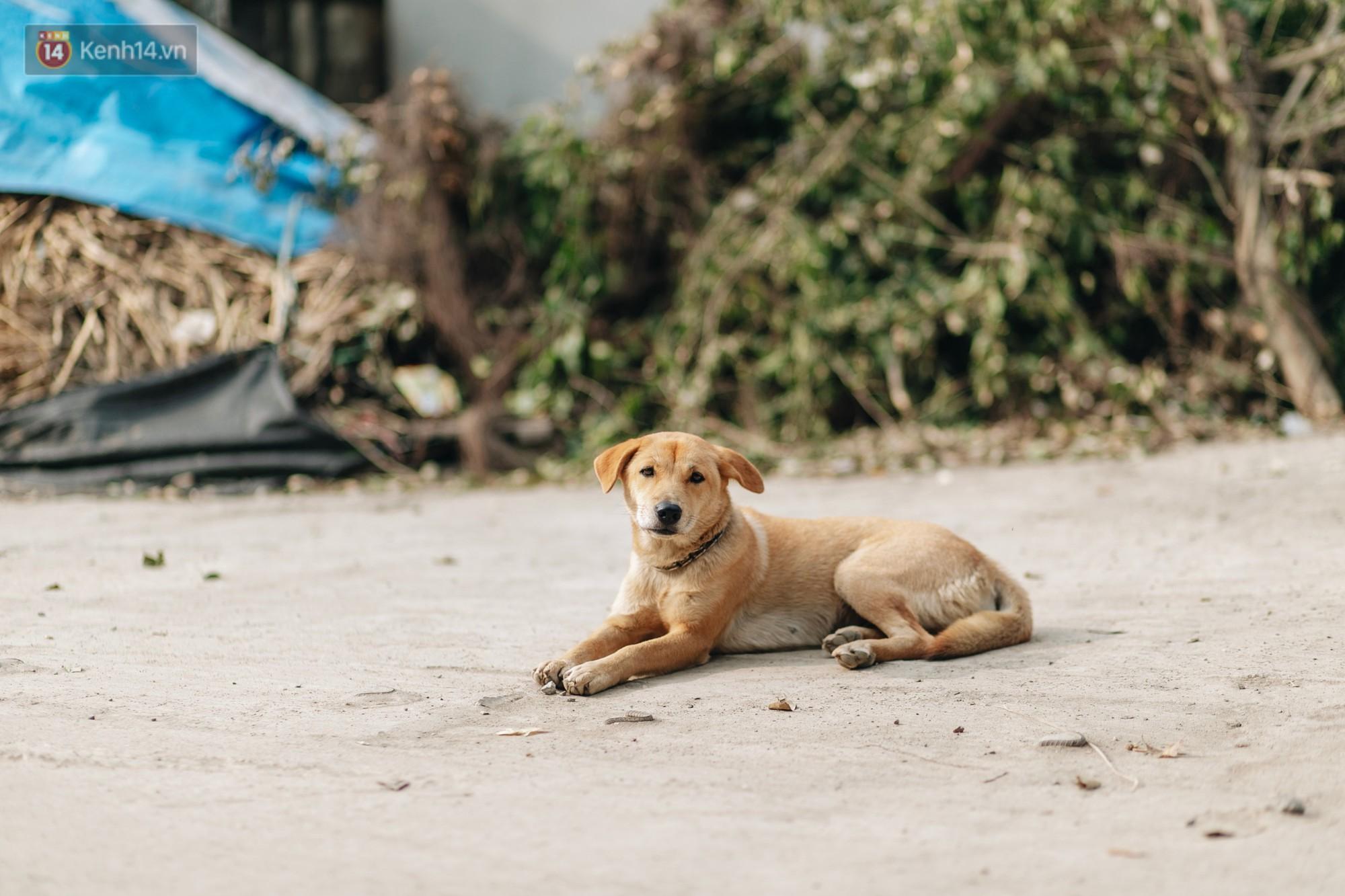 Về thăm ngôi làng ở Hà Nội ăn cả tấn thịt chó vào mùng 4 Tết hàng năm: Không ép bất cứ ai nếu họ không muốn ăn - Ảnh 5.