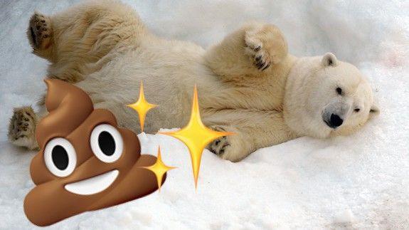 Gấu trắng Bắc Cực khắp Bắc Mỹ đang cho ra những cục phân... phát sáng và đây là lý do - Ảnh 1.