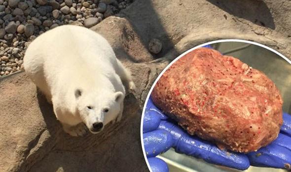 Gấu trắng Bắc Cực khắp Bắc Mỹ đang cho ra những cục phân... phát sáng và đây là lý do - Ảnh 2.