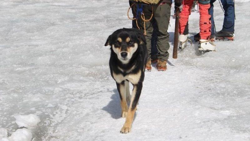 Lẽo đẽo theo sau đoàn leo núi, cô chó hoang lập kì tích khi lên tới đỉnh dãy Himalaya cao hơn 7000 mét - Ảnh 2.