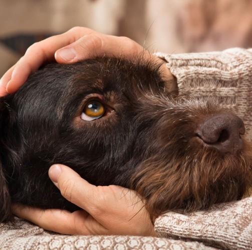 Những căn bệnh nguy hiểm bạn có thể bị lây từ thú cưng - Ảnh 7.