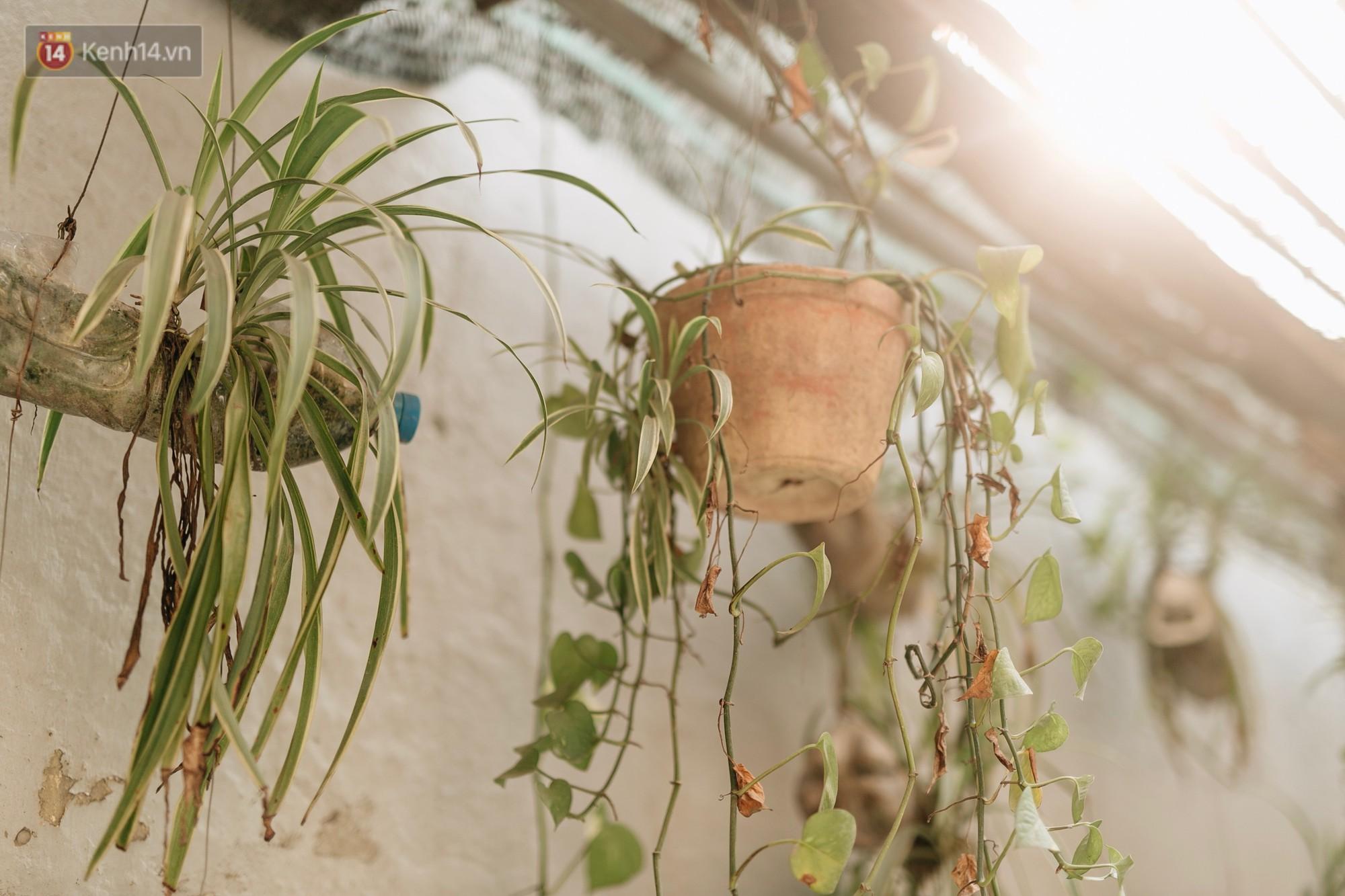 Không được người dân chăm sóc, những vườn hoa sinh ra từ bãi rác ở Hà Nội đã héo úa: Cần lắm sự chung tay của cả cộng đồng! - Ảnh 15.