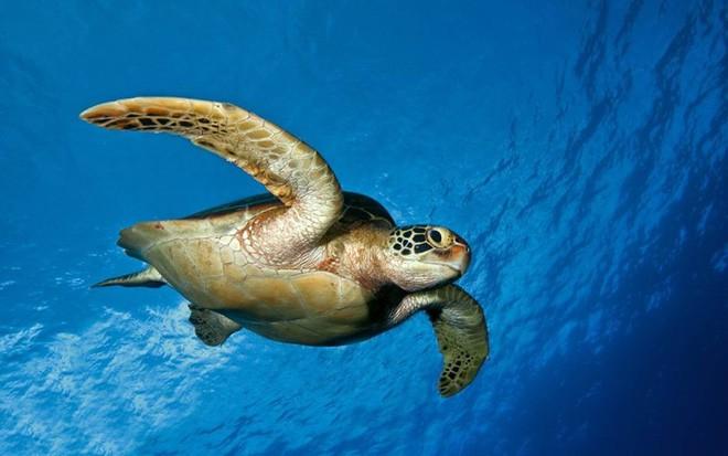Rác thải nhựa: Thứ chúng ta chỉ dùng vài phút ngắn ngủi nhưng lại là bi kịch nghìn năm của mọi sinh vật biển - Ảnh 2.