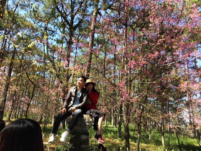Góc thở dài: Lên Đà Lạt check-in với mai anh đào, nhiều bạn trẻ tiện thể ngắt hoa, bẻ cành, đu hẳn lên tường để chụp ảnh - Ảnh 6.