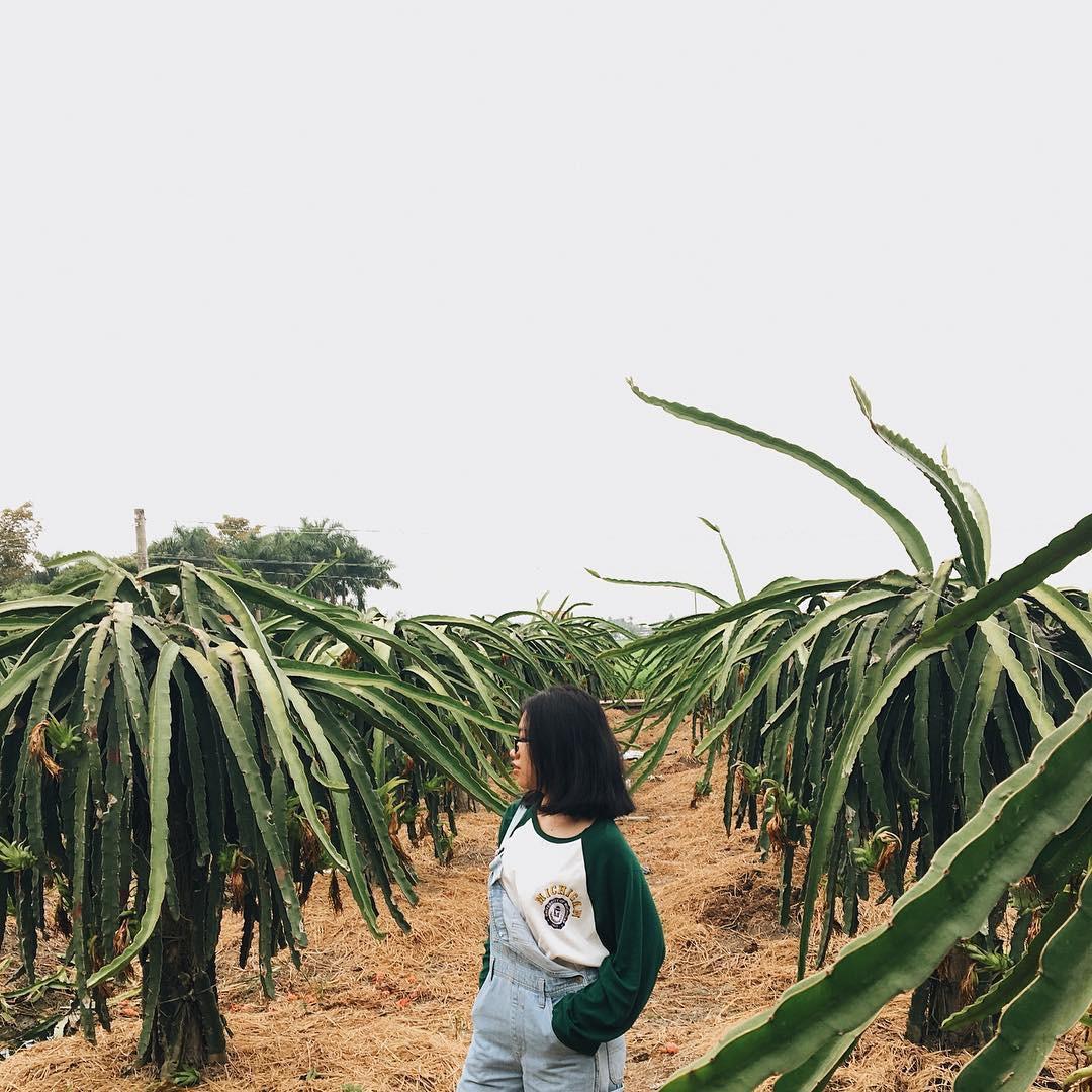Ai mà ngờ có ngày vườn thanh long ở Phan Thiết lại trở thành điểm đến hot hòn họt được giới trẻ đổ xô kéo đến - Ảnh 8.