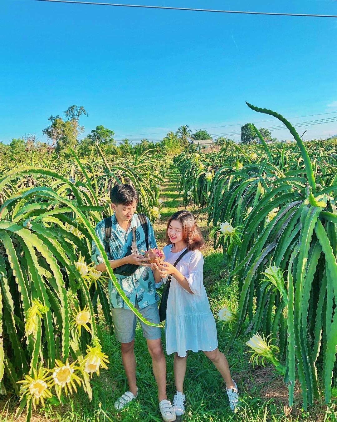 Ai mà ngờ có ngày vườn thanh long ở Phan Thiết lại trở thành điểm đến hot hòn họt được giới trẻ đổ xô kéo đến - Ảnh 5.