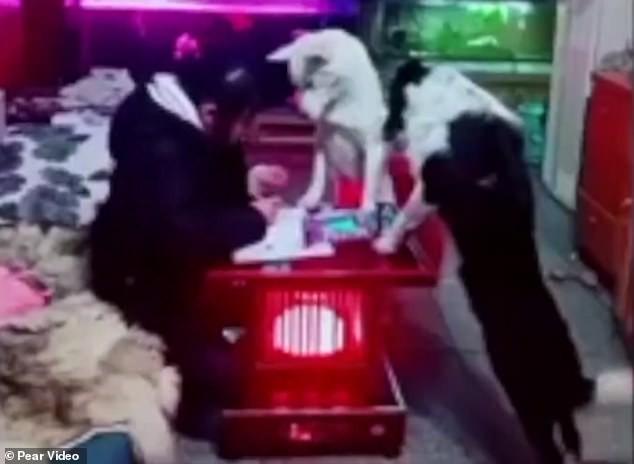 Con gái quá lười học, ông bố huấn luyện chú chó thành người canh chừng con học bài - Ảnh 3.