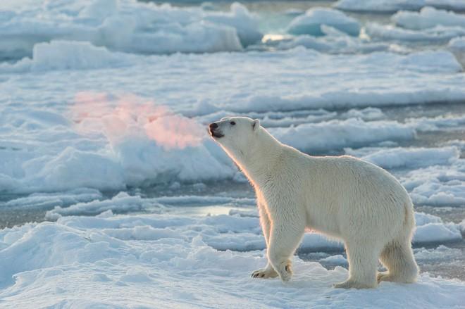 Tin chính thức: Chúng ta không thể làm gì để ngăn nhiệt độ Bắc Cực tăng - Ảnh 1.