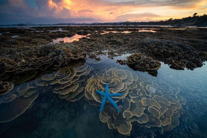 """Bình minh Mù Cang Chải"""" - bức ảnh của nhiếp ảnh gia người Việt lọt top 12 ảnh đẹp trên National Geographic khiến bạn bè quốc tế trầm trồ - Ảnh 4."""