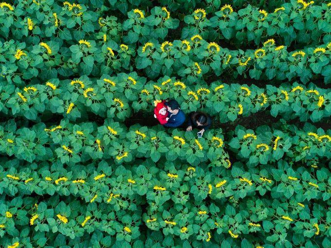 """Bình minh Mù Cang Chải"""" - bức ảnh của nhiếp ảnh gia người Việt lọt top 12 ảnh đẹp trên National Geographic khiến bạn bè quốc tế trầm trồ - Ảnh 12."""
