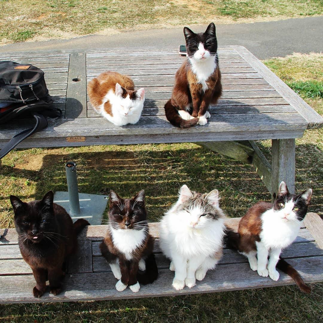 Đến thăm đảo mèo lớn nhất Nhật Bản, hội con sen đến đây thì đảm bảo sướng phát ngất! - Ảnh 3.