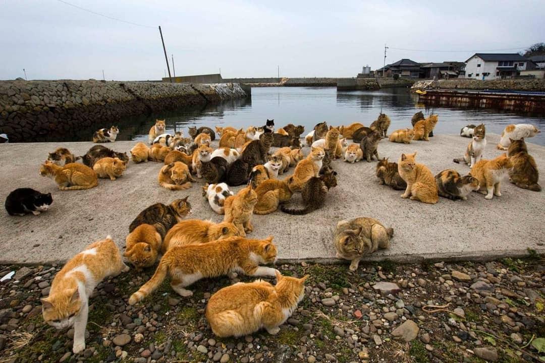 Đến thăm đảo mèo lớn nhất Nhật Bản, hội con sen đến đây thì đảm bảo sướng phát ngất! - Ảnh 7.