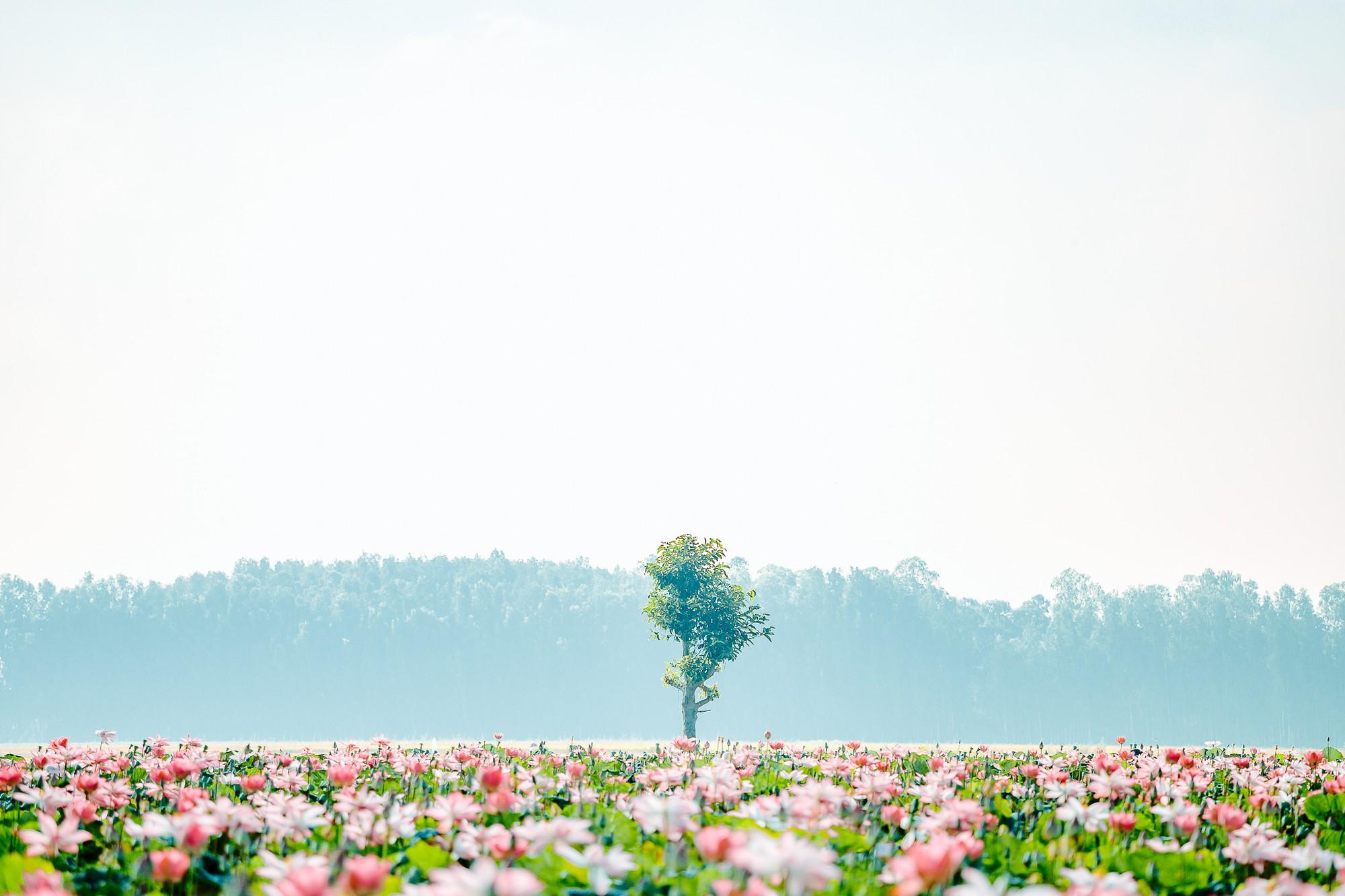 Đã lùng ra địa chỉ cánh đồng sen rộng bát ngát tại An Giang: Thiên đường sống ảo là đây chứ đâu nữa! - Ảnh 2.