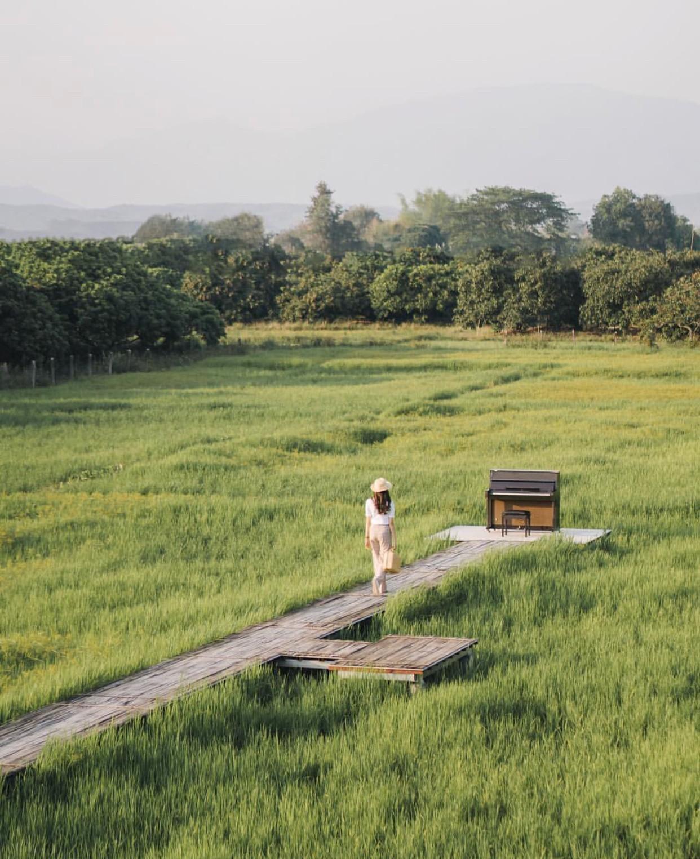 Phát hiện quán cà phê giữa cánh đồng ở Chiangmai (Thái Lan) lên ảnh đẹp không thua gì phim điện ảnh - Ảnh 1.