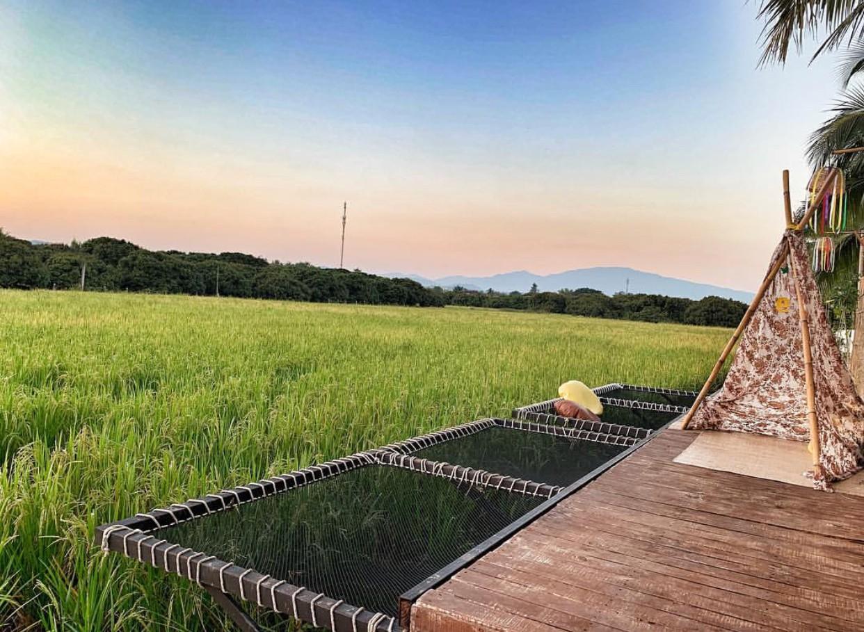Phát hiện quán cà phê giữa cánh đồng ở Chiangmai (Thái Lan) lên ảnh đẹp không thua gì phim điện ảnh - Ảnh 5.