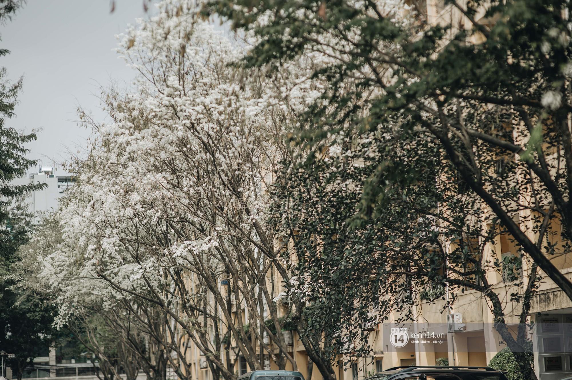 Đây là Hà Nội, của những ngày hoa sưa tinh khôi phủ trắng trời như tuyết - Ảnh 13.